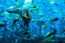 Spend A Fun Day At The Melbourne Aquarium