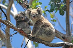 Making A Trip To Melbourne Zoo